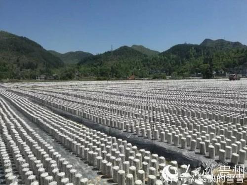 贵州沿河食用菌基地配电室气体灭火系统